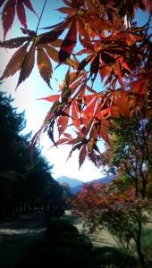 Nami Island leaves